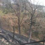 Incendio lambisce coop gelsibachicoltura nel Catanzarese, indagini