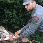 Furto di legna, padre e figlio denunciati nel Cosentino