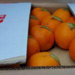 Agrumi: Coldiretti, finte clementine dal Pakistan a Gioia Tauro