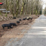 Pascolo abusivo nel Parco d'Aspromonte, una denuncia