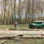 Taglia abusivamente alberi nel Parco d'Aspromonte arrestato