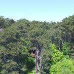 """Giornata mondiale della terra alla Riserva Naturale """"I Giganti della Sila"""""""