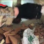 Droga: cocaina e marijuana nel muro di casa, un arresto a Mileto