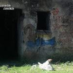 Cucciolo cane chiuso in un sacco e abbandonato, salvato dai Cc