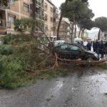 Vibo Valentia: grosso ramo cade su auto, illesa donna