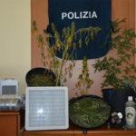 Droga: coltivava marijuana cannabis in casa, arrestato nel Vibonese