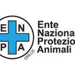 """Gatto ucciso davanti a scolari: Enpa, """"Bidello va sospeso"""""""