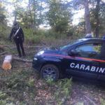 Furto legname: 43enne arrestate nel Catanzarese dai Carabinieri