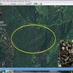 Tagliano centinaia di alberi nel Catanzarese, cinque arresti