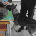 Lamezia: unità cinofila della Polizia presso Istituto Professionale