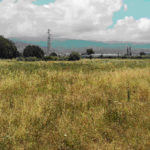 Lamezia:  il Parco di Savutano tra mito e realtà