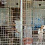 Allevamento cani illegale sequestrato nel Crotonese