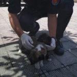 Cuccioli di cane abbandonati soccorsi dai Carabinieri nel Reggino