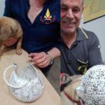 Cucciolo cane con testa incastrata in paralume soccorso dai Vvff