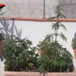 Coltiva droga nel balcone di casa, 54enne arrestato dai Carabinieri