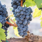 Regione: pubblicato bando promozione settore vitivinicolo