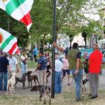 Cosenza: successo della mostra amatoriale canina, vince Olimpo