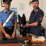 Munizioni sequestrate dai Carabinieri a Polia, una denuncia