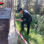 Ambiente: taglio piante senza autorizzazioni, sequestri nel Cosentino