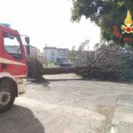 Incendi e vento nel Catanzarese l'impegno dei Vigili del Fuoco