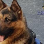 Abbandono animali, al via campagna sensibilizzazione Polizia Stato