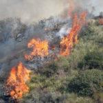 Incendi: roghi a Catanzaro e provincia spenti da Vigili Fuoco
