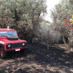 Incendi: roghi nel Catanzarese spenti da Vigili Fuoco