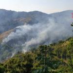 Incendi: fiamme in Parco biodiversità Catanzaro, vigili al lavoro