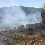 Incendi: uliveto in fiamme nel Catanzarese domato dai Vigilfuoco