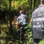 Droga: mille piante di marijuana sequestrate in Parco Aspromonte