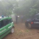 Platania: taglio abusivo piante in un bosco di ontano, denunce