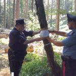 Ambiente: taglio abusivo di 3 ettari di bosco nel Lametino