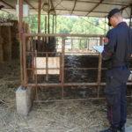 Ambiente: controlli Carabinieri nel Cosentino, denunce