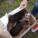 Cani abbandonati: Cosenza, Nucleo Decoro Urbano in azione