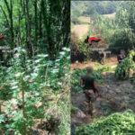Carabinieri Maierato: individuazione piantagione Cannabis Indica