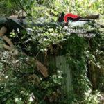 Droga: scoperte nel vibonese 17 piantagioni di canapa indiana
