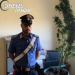 Trovato in casa con stupefacente e piantine di marijuana arrestato