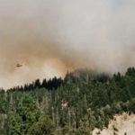 Regione: Disponibile graduatoria per ripristino foreste danneggiate