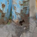 Lamezia: Nuovo Cdu sostituire i pali bucati dela illuminazione pubblica