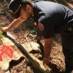 Taglio abusivo di alberi nel Cosentino, 5 persone denunciate