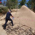 Controlli dei carabinieri forestali nel Vibonese, sanzioni e denunce