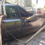 Lamezia: albero si abbatte su auto in transito, ferita una donna