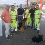 Tre pastori tedeschi salvati sull'A2 dai cantonieri Anas