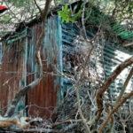 Droga: Platì, rinvenuta piantagione di canapa indiana