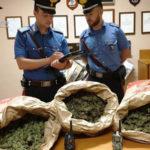 Droga: 9 kg di marijuana al posto dei funghi, 3 arresti nel Reggino