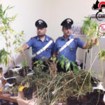 Droga: marijuana in casa, un arresto a Catanzaro