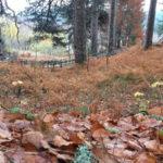 La magia del foliage alla scoperta di uno dei più belli d'Italia