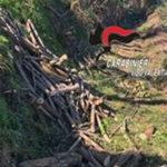 Taglio e furto di alberi, un arresto nel Vibonese