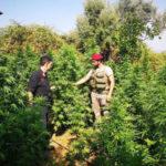 Droga: coltivavano piante marijuana, due arresti a San Luca