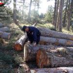 Taglio abusivo di alberi a Spezzano Sila, una denuncia